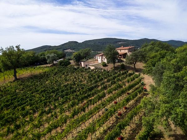 wijnhuis Peierini e Brugi