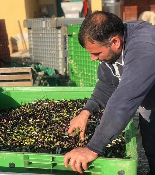 handmatig oogst en selectie-harvesting and manual selection